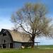 Barn.  Washington