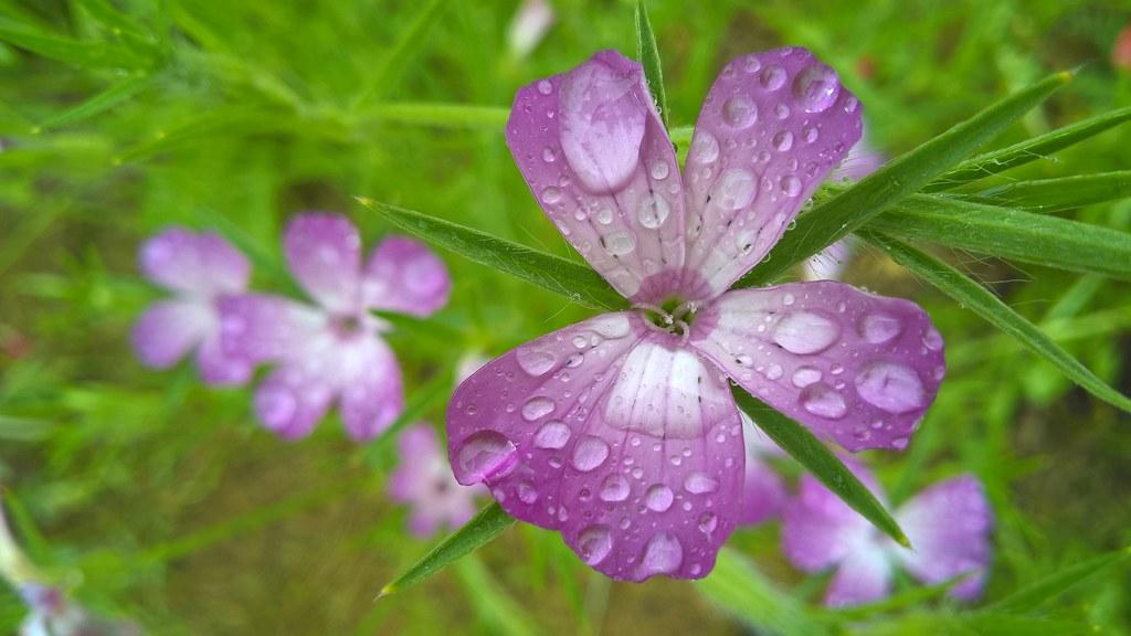 Flower example