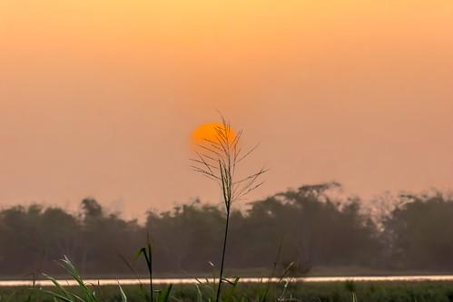 sunset wild sky sun nature caribbean westindies trinidadandtobago sunsetbackground caroniricefields
