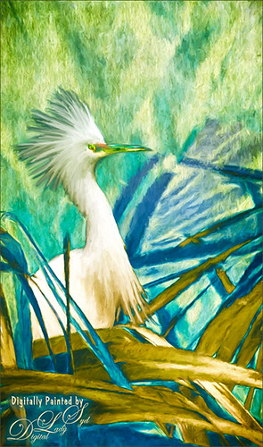 Image of a Snowy Egret