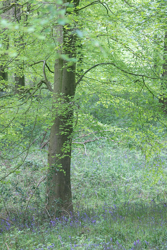 Beeches at Charborough Park 4