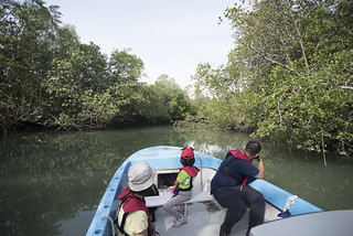 Sungei Jelutong mangroves at Pulau Ubin