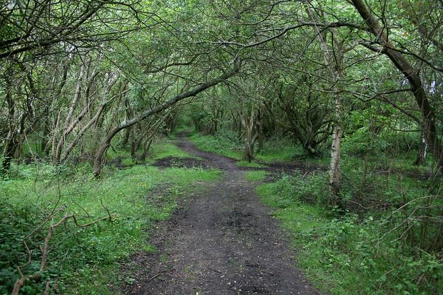 Woodland near Ashlett