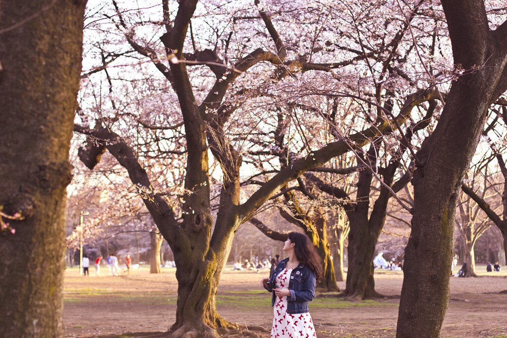 nishe bow dress tokyo sakura cherry blossom festival laila tapeparade yoyogi park