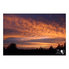 The sunset tonight... Wow! #sunset #sunset_fx #sunsetsfordayss #nightsky #mono #Orangeville #ontario #lifewithhorsesphoto