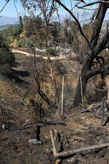 LAFD Extinguishes 8-Acre Brush Fire in Silver Lake; Shutting Down The 2 Freeway