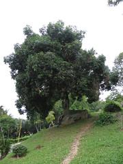 Bukit Melawati, Kuala Selangor