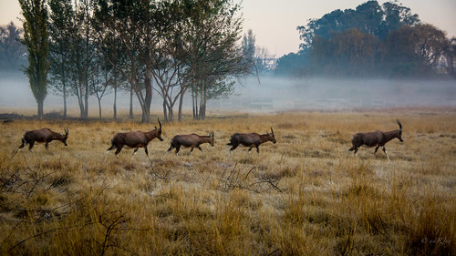 landscape raghujana aarjayphotography africa johannesburg southafrica sunrise kemptonpark gauteng