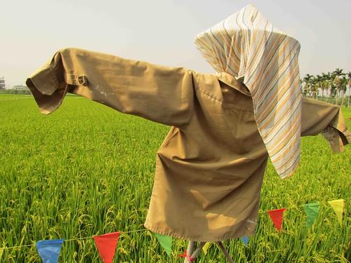 田裡的稻草人身負趕鳥重任。攝影:李慧宜