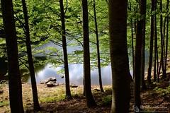 Da Rigoso a Prato Spilla (Parco dei 100 Laghi - Appennino parmense)