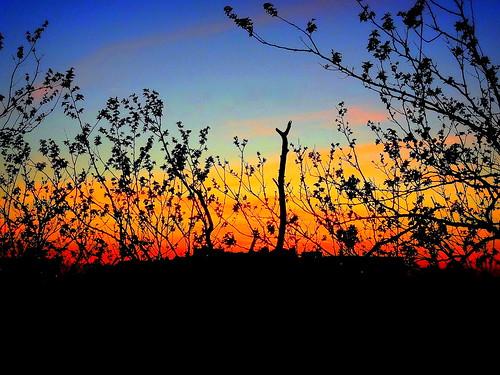 sunset newyork brooklyn image dmitriyfomenko