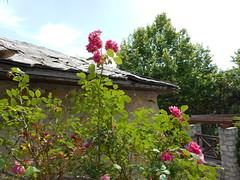 Το Γκιζάνι της Ψίνθου μετά από παρεμβάσεις νεαρών εθελοντών - Γκιζάνι Ψίνθος 2015