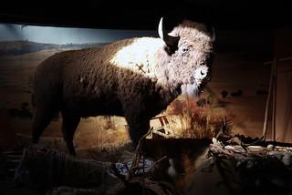 Real buffalo