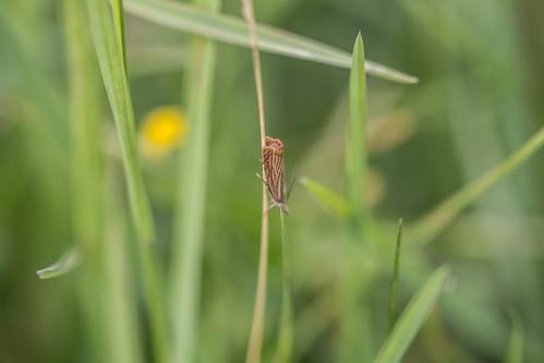 moths gardengrassveneer