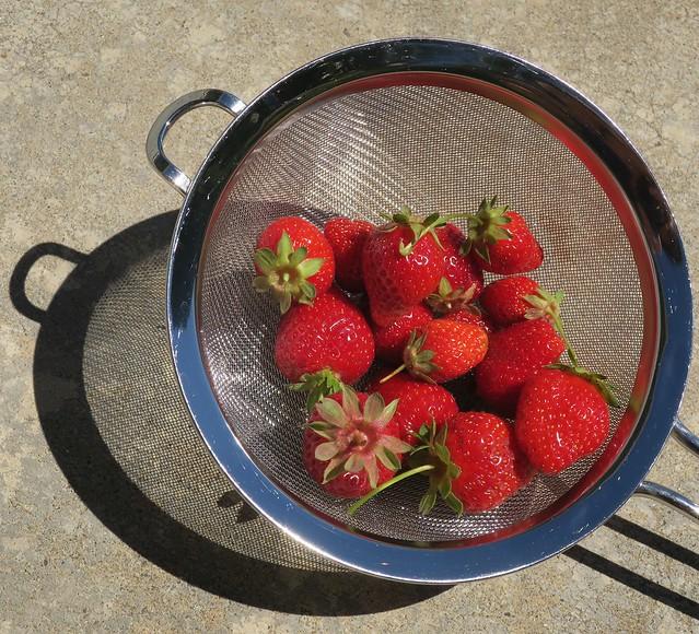 a handful of garden-grown strawberries