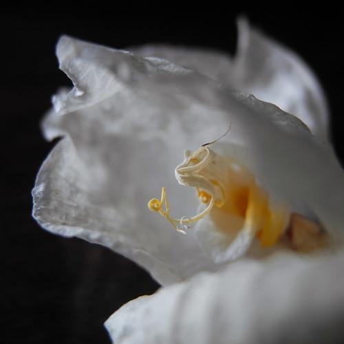 llambreig posted a photo:tú,figura espléndida, orquídea cuyo carácter aéreo me permite volar—Gonzalo Rojasbit.ly/29fqszT
