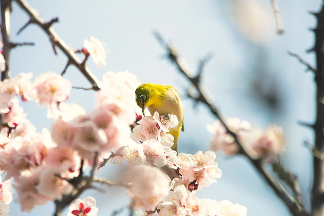 Spring Paradise