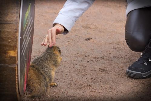 Squirrel, Morton Arboretum. 444 (EOS)