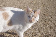 Un petit chat rouquin