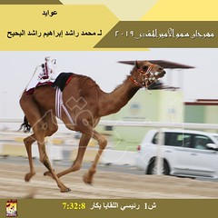 صور سباق اللقايا (الأشواط العامة) مهرجان سمو الأمير المفدى صباح 2-4-2019