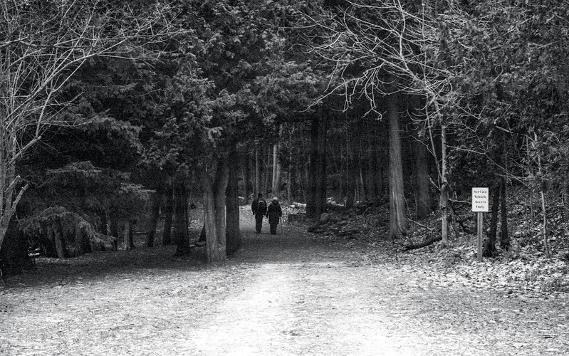 Walking off Into the Woods
