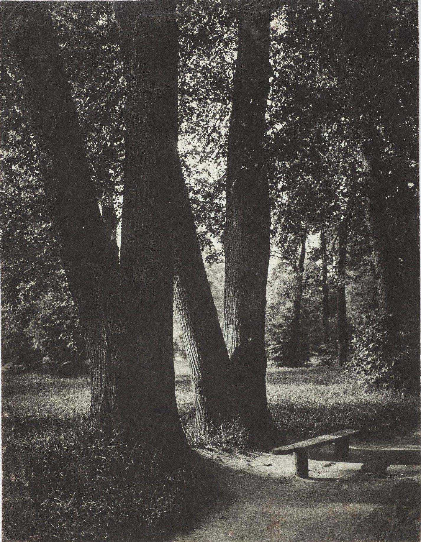 1900-е. Аллея в парке