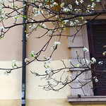 segni di primavera - https://www.flickr.com/people/94334860@N00/
