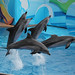 Dolphin(s)