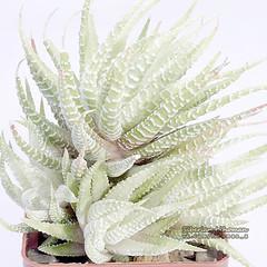 """Nature Art - """"Porcelain plant"""""""