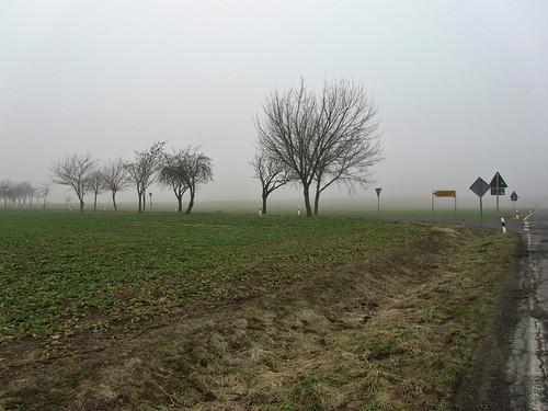20110316 0203 120 Jakobus Feld Bäume Nebel