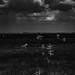 Overcast in Everglades