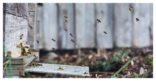 Bee delivery system