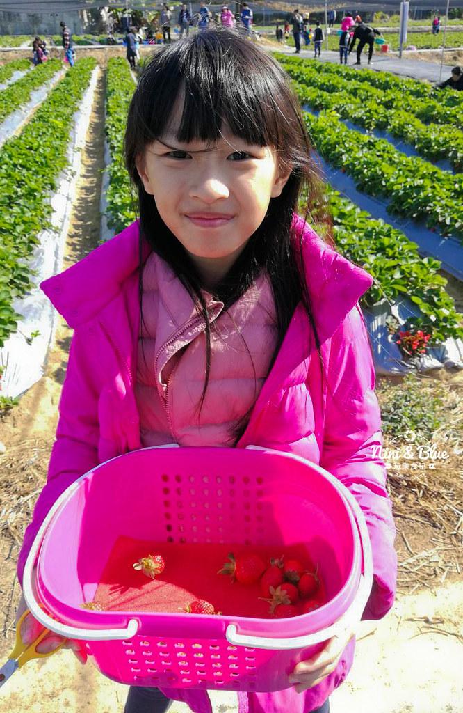 草莓世界.台中採草莓08