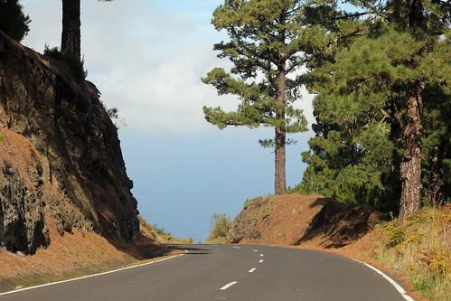 through pine forest down to Hoya Grande