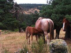 20080906 31534 1007 Jakobus Hügel Wald Bäume Pferde_K - Photo of Serverette