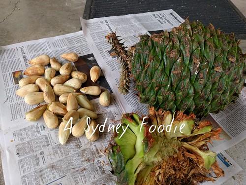 Bunya Pine nuts