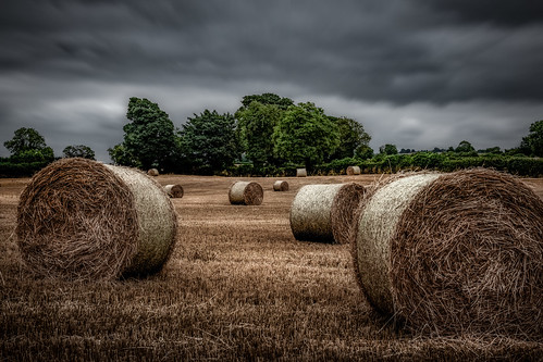 Straw Bales in County Kildare