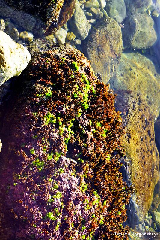 Камни с водорослями в водах Адриатики