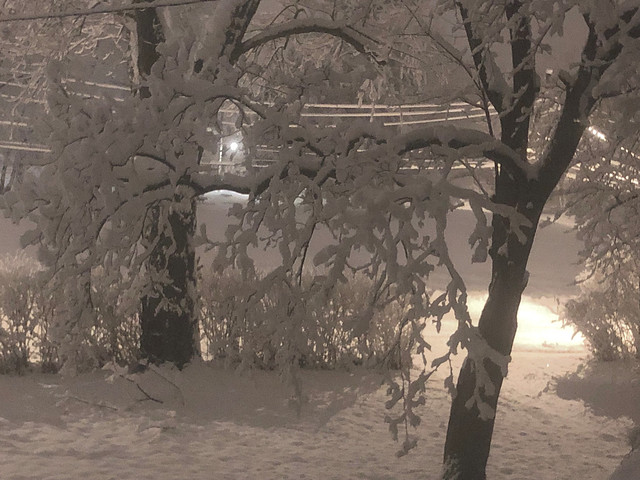 Winter Wonderland    Explored!