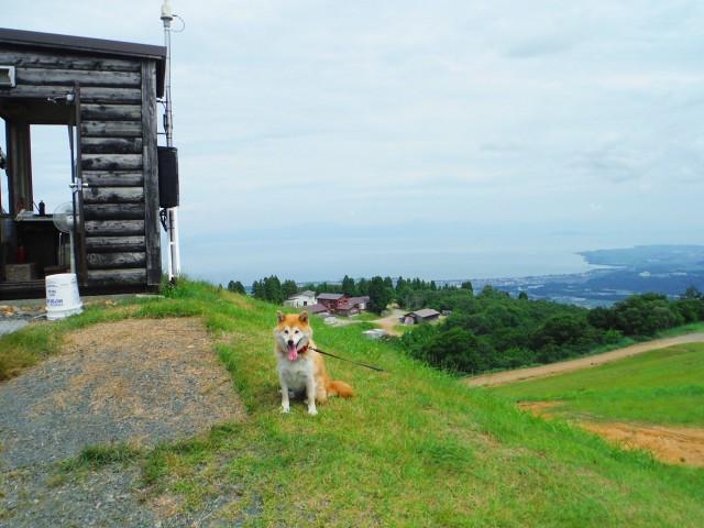 旅行を楽しむ犬