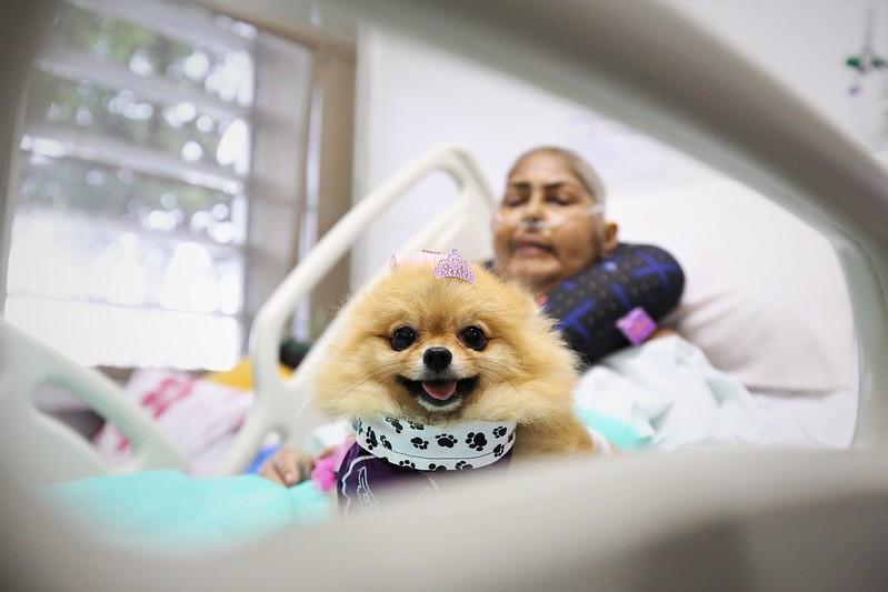 Projeto PET AMIGO alegra a vida dos pacientes do Hospital de Apoio de Brasília
