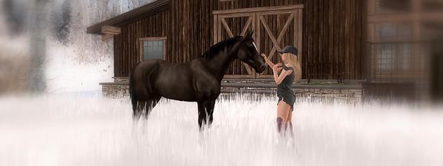 Horsey Moment