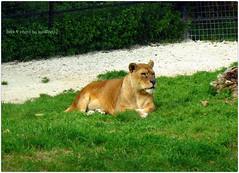 Parco zoo di Falconara Marittima (AN)