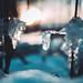 Ice by A. Aleksandravičius