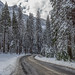 FS_photos posted a photo:A road trip into Yosemite Valley to enjoy the snow.