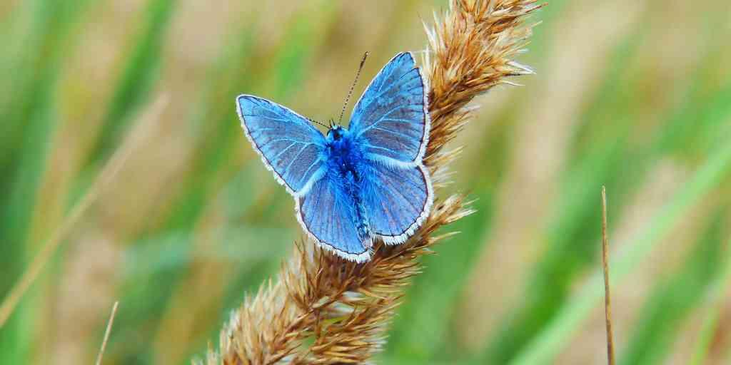 L'extinction mondiale des insectes pourrait être pire que nous le pensions