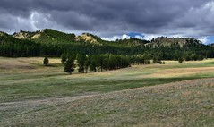 A Grassy Meadow Leading to a Forest Edge (Wind Cave National Park)