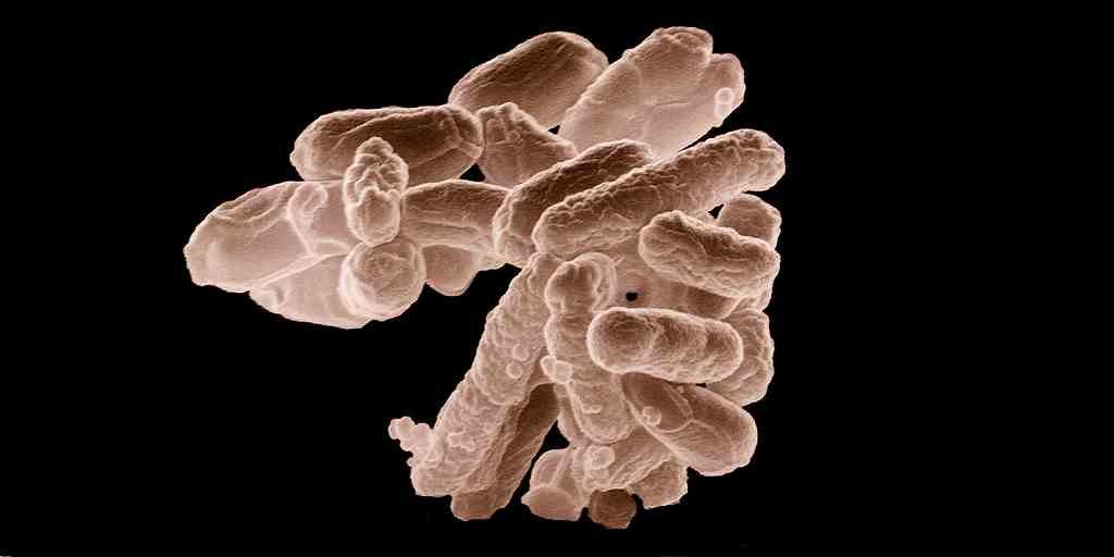 De gros virus en proie aux bactéries intestinales