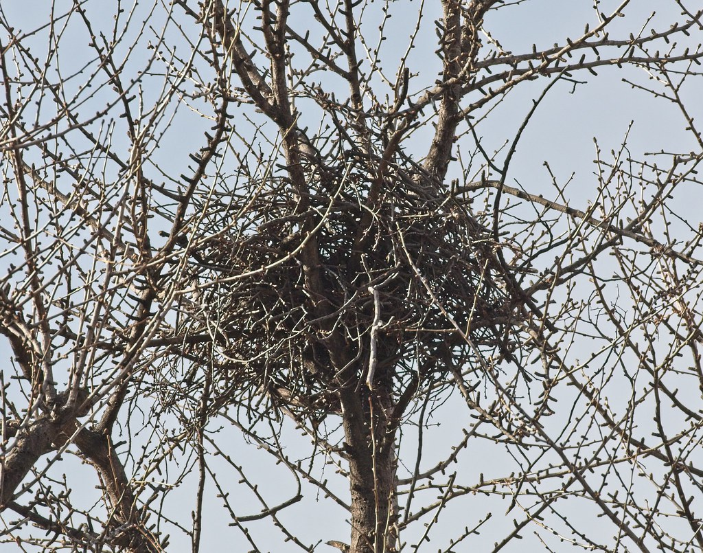 Nest progress