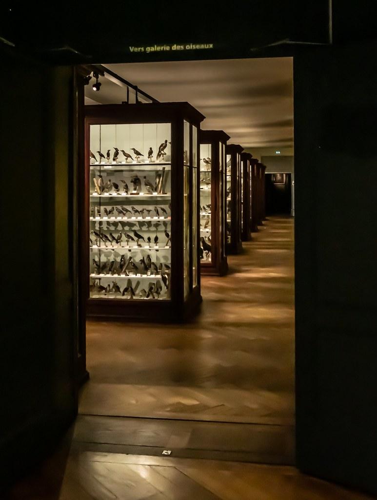La galerie des oiseaux... 40145615013_1fe38d9029_b